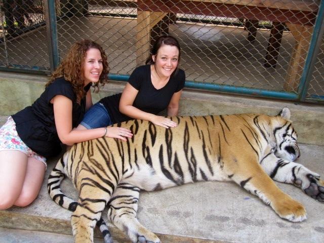 tigers2