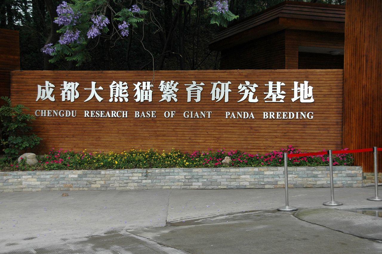 1280px-Chengdu_panda_breeding.jpg