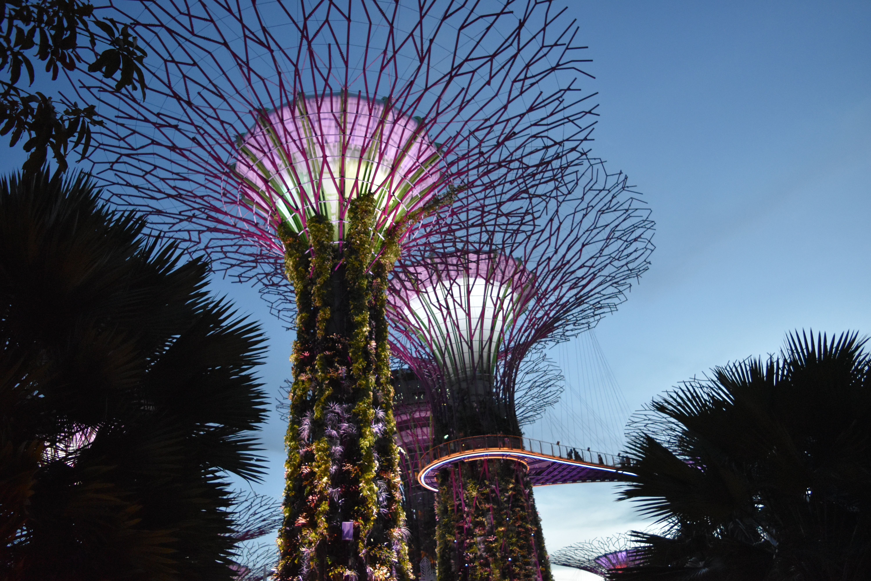 ILP Adventure in Singapore