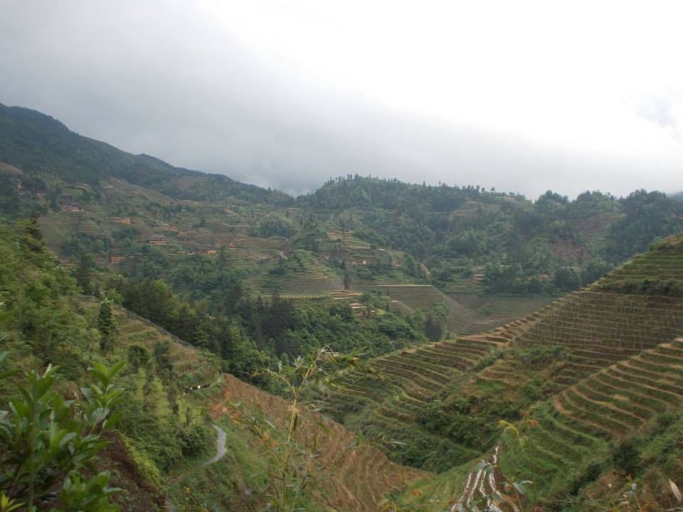Rice_Terraces.jpg