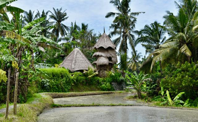 ILP Asia
