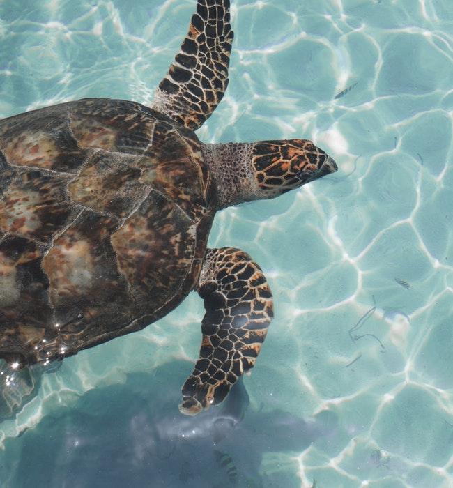 Sea turtle mexico blog