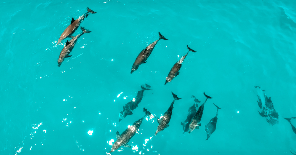 Zanzibar shutterstock_1066689647