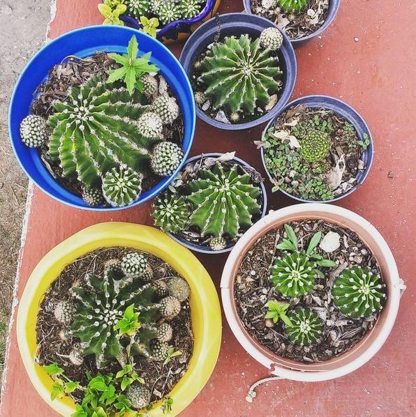 cactus_-_credit_emily.karyn-1.jpg