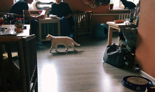 cat cafe - @e_lizarrd.jpg