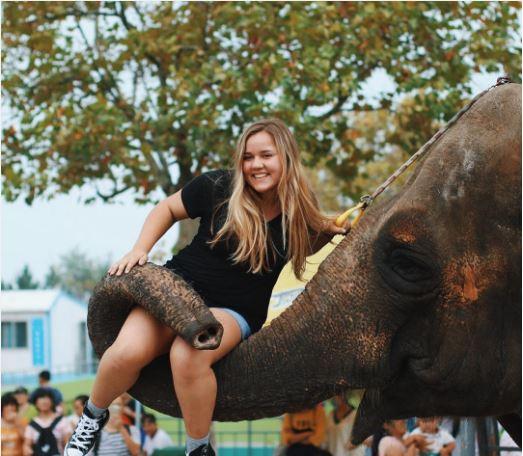elephant-2.jpg