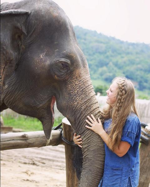 elephant_1.png