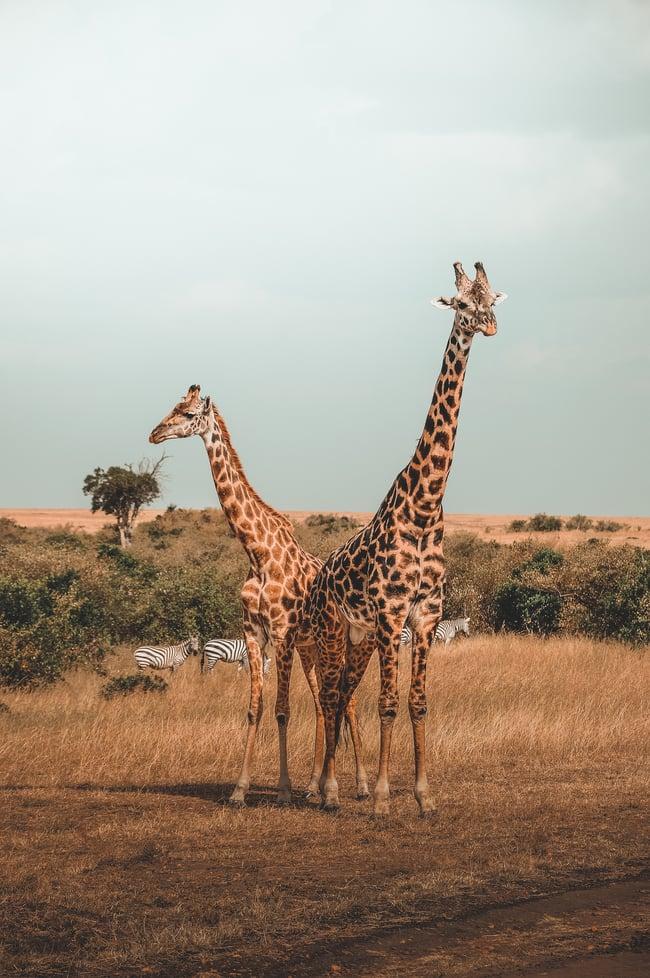 ILP Africa