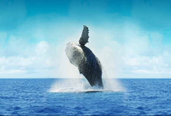 whale watch in mexico
