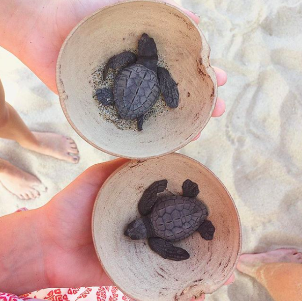 release baby sea turtles
