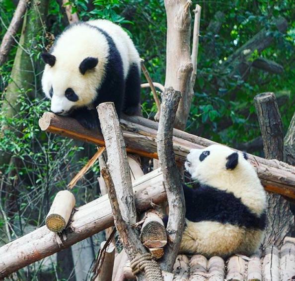 pandas2.png