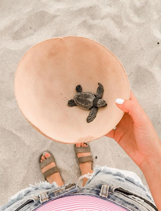 release turtles in Mexico